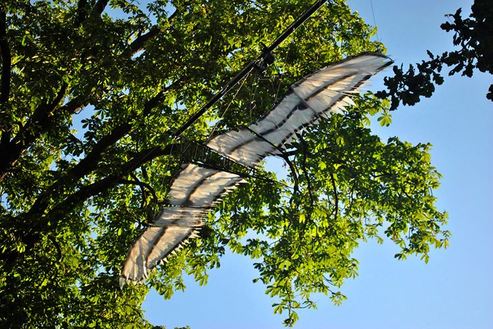 les ailes - création vivacité - 2019 con...